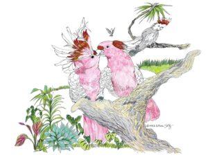 Kissing Cockatoos