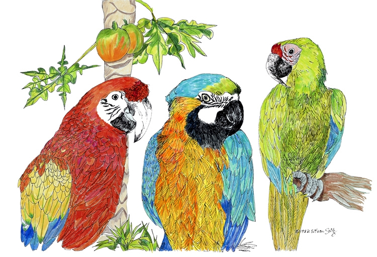 3 Macaws